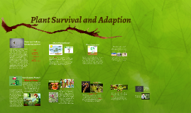 Plant Survival and Adaption