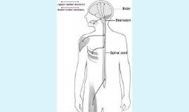 ALS Visual Aid 1