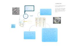 Biologia : autofagia