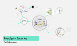 Nervous System : Concept Map