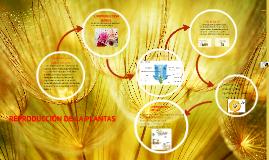Copy of REPRODUCCIÓN DE LA PLANTAS