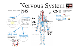 Copy of Nervous System