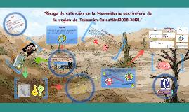 """""""Riesgo de extinción en la Mammillaria pectinifera de la reg"""