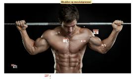Muskler og muskelgrupper