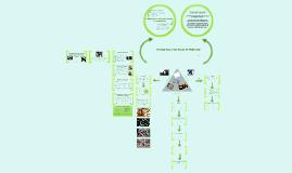 Environmental psychology - PRISONS