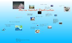 Marine Habitat Destruction