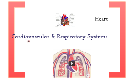 VCE PE Cardiovascular & Respiratory Systems