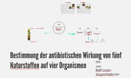 Bestimmung der antibiotischen Wirkung von fünf Naturstoffen