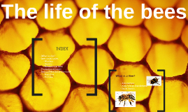 The life of the bees
