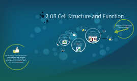 2.03 Cell Structure and Function