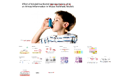 Effect of Inhaled Inactivated Mycobacterium phlei