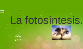 Copy of Copy of fotosintesis!