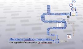 Méridiens tendino-musculaires