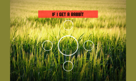 If I get a rabbit