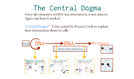 AP Bio- Molecular Genetics 2:  The Central Dogma