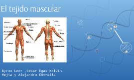 El tejido muscular