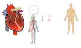L'interaction des systèmes d'organes