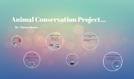 Animal Conservation Prodject...