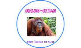 Oerang-Oetan