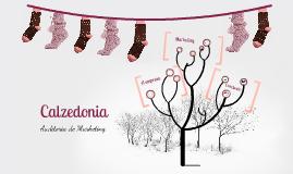 Copy of Calzedonia