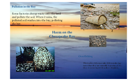 Pollution in the Chesapeake Bay