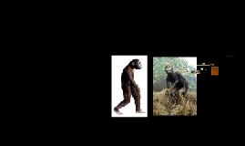 evolucion de la postura humana