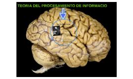 TEORIA DEL PROCESAMIENTO DE INFORMACIO