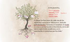 Copy of INTEGRANTES.
