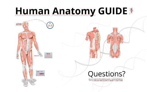 Reusable EDU Design: Human Anatomy Guide