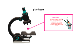 Copy of PLANKTON