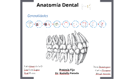 Copy of Anatomía dental.