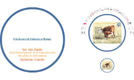 Terio1: Transferencia de Embriones en bovinos