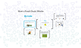 how a food chain works