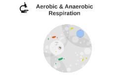 Anatomy - Metabolism