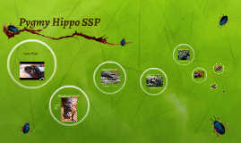 Pygmy Hippo SSP