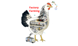Copy of Factory Farming