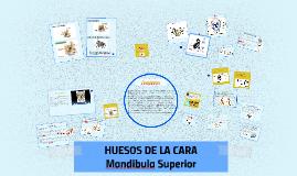 Copy of HUESOS DE LA CARA
