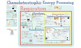 AP Bio: Chemoheterotrophic Nutrition