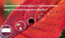 Copy of Comment le prunus réalise la photosynthèse alors que ses feu