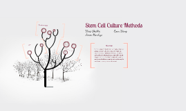 Stem Cell Culture Methods