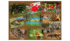 Copy of La Pérdida y Alteración de los Ecosistemas