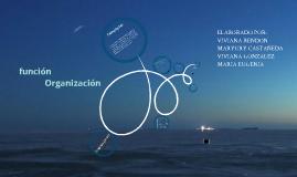 FUNCIÓN DE ORGANIZACION