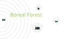 jennifer Boreal forest