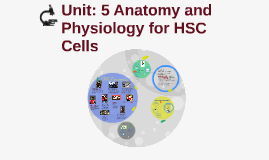 Unit: 5 Anatomy and Physiology for HSC