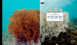 Conserving Coral Reefs