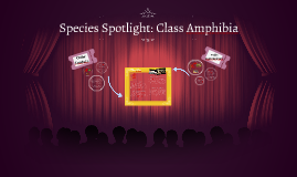 Species Spotlight: Class Amphibia