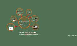 Order: Tubulidentata