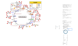 Citric Acid Cycle and Electron Transport Chain