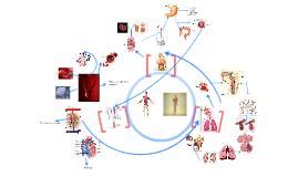 Mapa mental funciones vitales