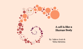 A cell is like a Human Body
